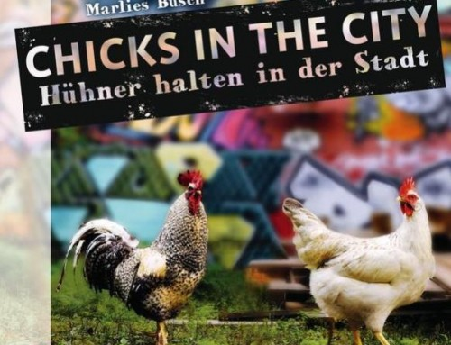 Chicks in the city / Marlies Busch
